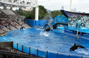 Shamu Burst