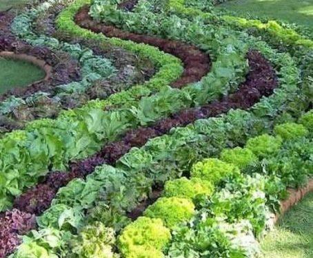 Perfect Edible Garden